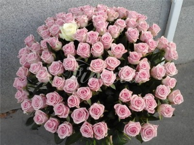 200 pink roses