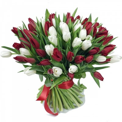 80 red white tulips